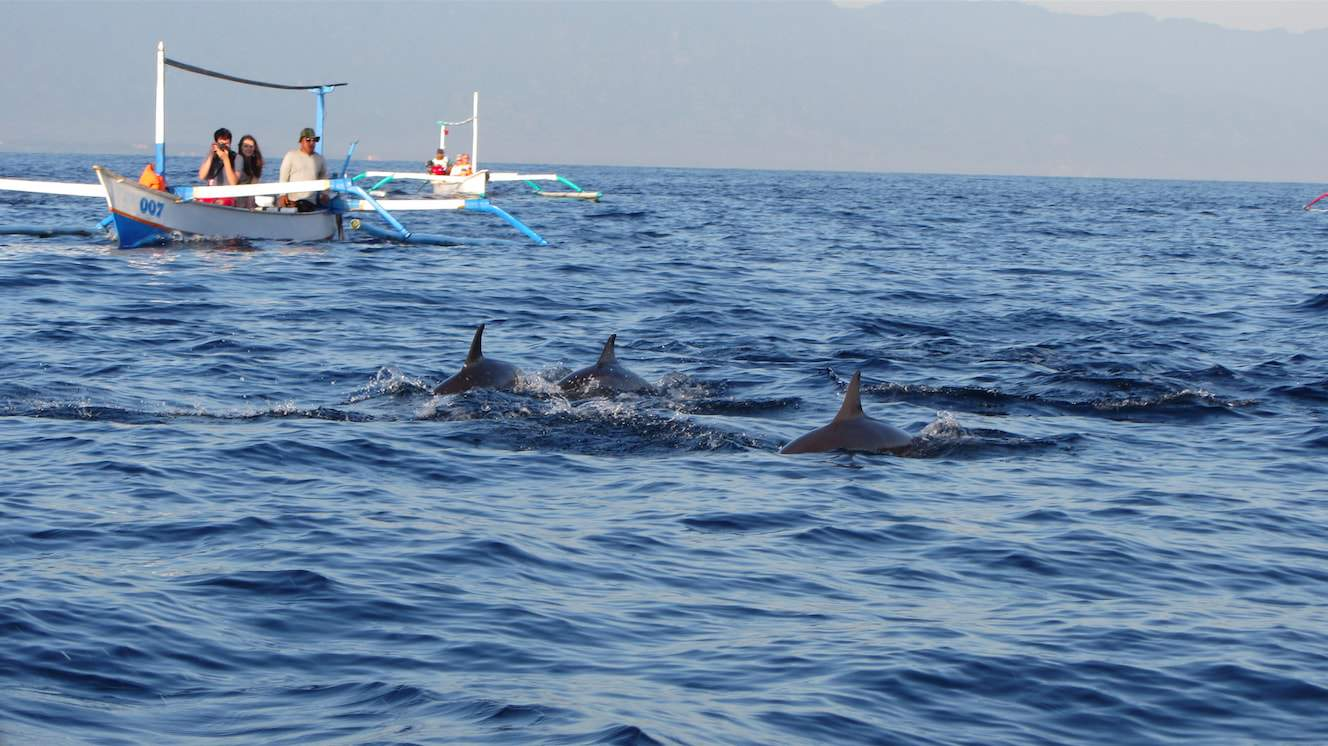 Dolphin Watching in Lovina, Bali Villas For Rent, things to do north bali