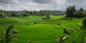 Family Villa in Bali